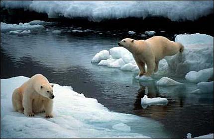 isbjornar-i-arktis.jpg