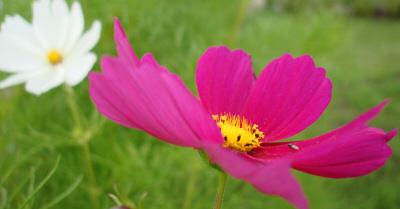 blom.jpg